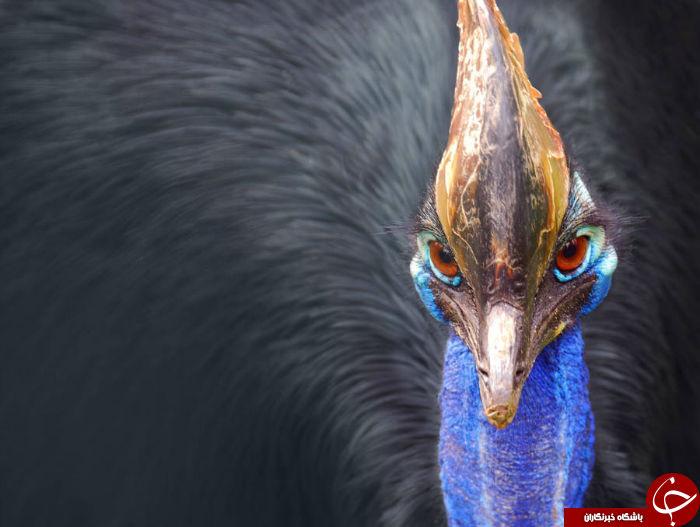 ۲۵ جانور مرگبار جهان؛ از ماهی سنگی تا کروکودیل آب شور+ تصاویر