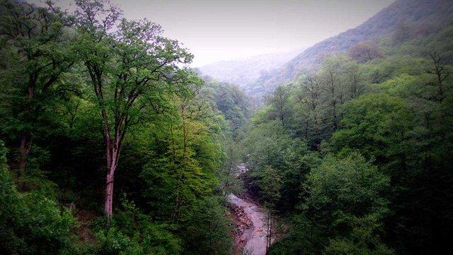 جنگلهای هیرکانی ایران در راه ثبت جهانی