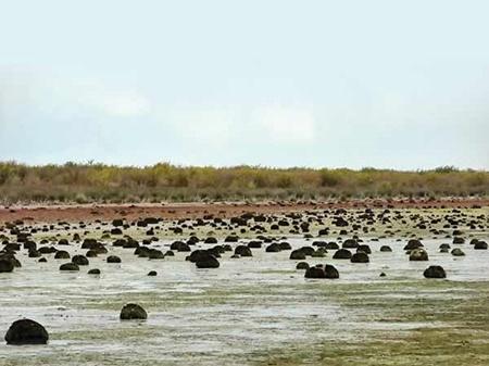20درصد تالاب میانکاله کاملا خشک شده است/ 80 درصد مصارف آبی در بخش کشاورزی است