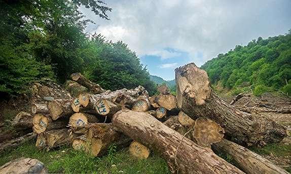 باشگاه خبرنگاران -کشف محموله چوب جنگلی قاچاق در سیاهکل