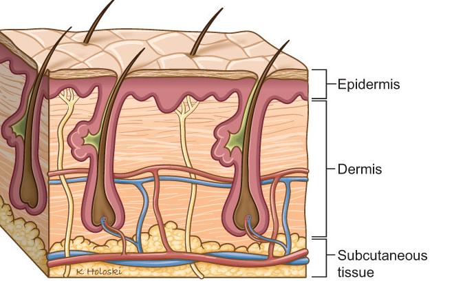 ترمیم زخمهای پوستی