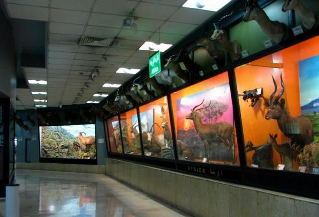 موزه تاریخ طبیعی یک خزانهملی برای شناخت تنوع زیستی است