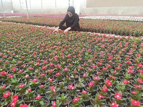 صنعت گل و گیاه جایگزینی مناسب برای درآمدهای نفتی