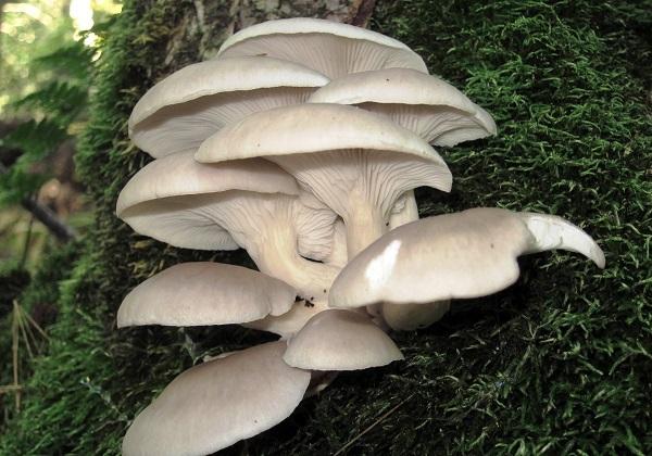 باز شدن چتر قارچهای سمی در استانهای غربی + صوت