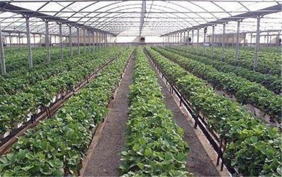 نیاز آبی کم و درآمدزایی از مهمترین علل اقبال کشاورزان به ایجاد گلخانه است