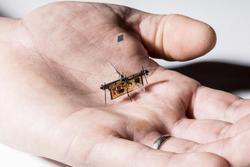 نخستین حشره رباتیک به پرواز درآمد