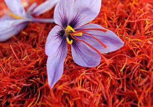 قیمت زعفران نگین در بازار داخلی ۶۵۰۰ تومان در هر گرم است