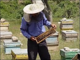 افزایش 80 درصدی کندوهای عسل در تایباد