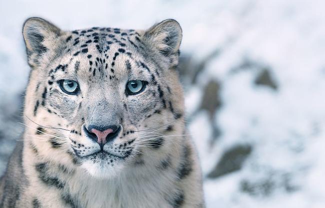 تصاویر بینظیر از حیواناتی که در خطر انقراض قرار دارند