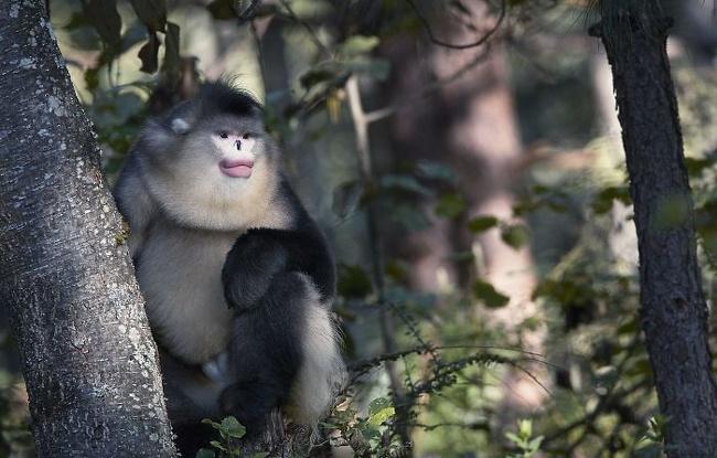 8023617 380 تصاویری از حیواناتی که در خطر انقراض قرار دارند