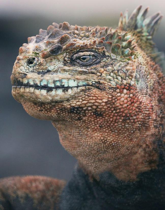 8023618 918 تصاویری از حیواناتی که در خطر انقراض قرار دارند