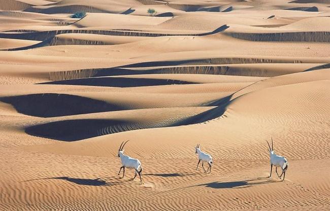 8023619 607 تصاویری از حیواناتی که در خطر انقراض قرار دارند