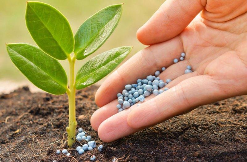 تولید ۵۰ نوع محصول زراعی در آذربایجان غربی
