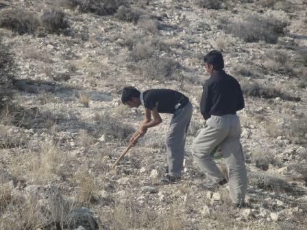 دستگیری ۳ متخلف و بهره بردار غیر مجاز شیره آنغوزه