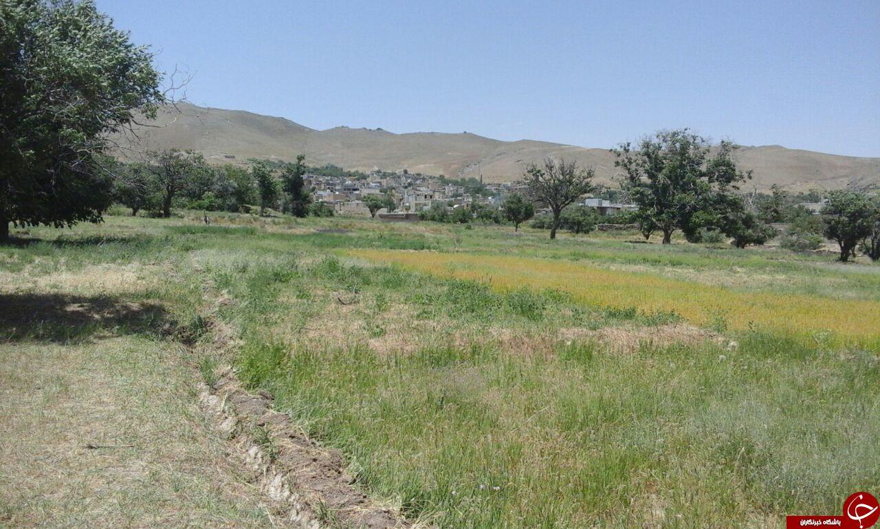 نمایی از طبیعت بهاری در روستای کمری + تصاویر