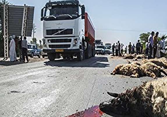 باشگاه خبرنگاران - برخورد کامیون با گله گوسفند در پلدختر