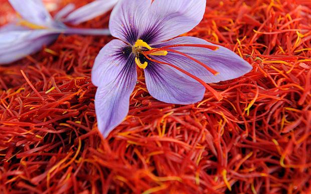 صادرات زعفران مقرون به صرفه نیست/ نرخ هر کیلو طلای سرخ ایرانی 6 میلیون و 500 هزار تومان