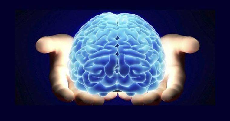 چربیهای مفید برای مغز را بشناسید,
