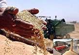 باشگاه خبرنگاران -خرید تضمینی بیش از ۸۰ هزار تن گندم از کشاورزان فارس