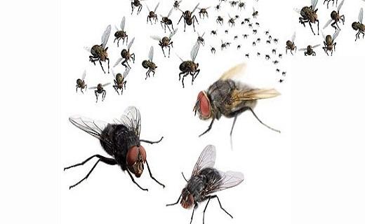 راههای فرار از مزاحمت حشرات/ علت زانو درد در جوانی چیست/ علائم یک باکتری کشنده/