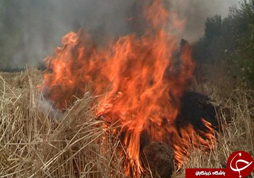 بر باد رفتن منابع طبیعی با به آتش کشیدن بقایا گیاهی / کاه و کلش را آتش نزنید!