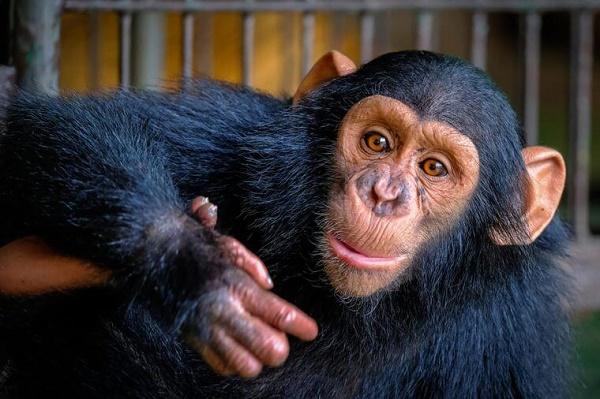 با 12 مورد از باهوش ترین حیوانات دنیا آشنا شوید