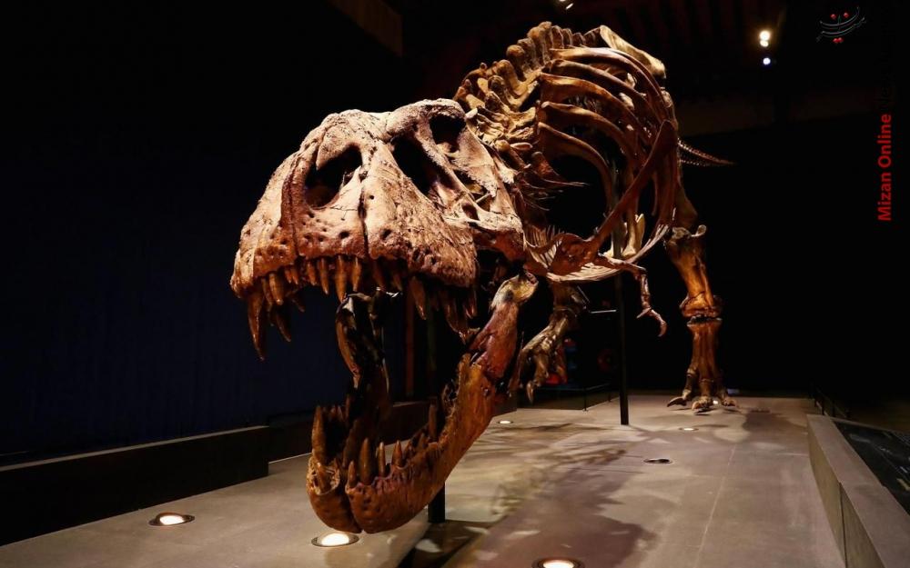 کشف اسکلت دایناسوری در آمریکا+عکس