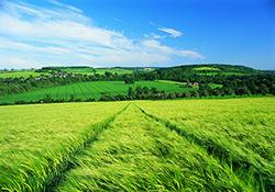 بیشترین تفاوت در کمترین فاصله میان دو مزرعه + فیلم