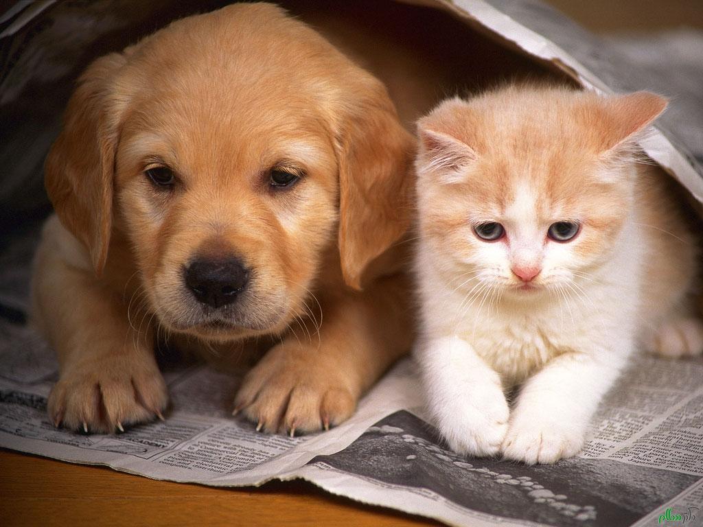 غذاهای ممنوعه و مضر برای سگ و گربه + لیست