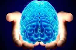 هوش مصنوعی به پی بردن اسرار مغز کمک میکند