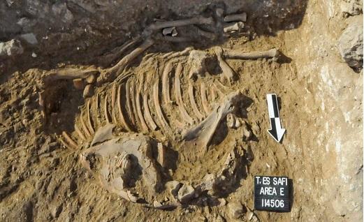 رمزگشایی از الاغهای 5000 ساله! + تصاویر