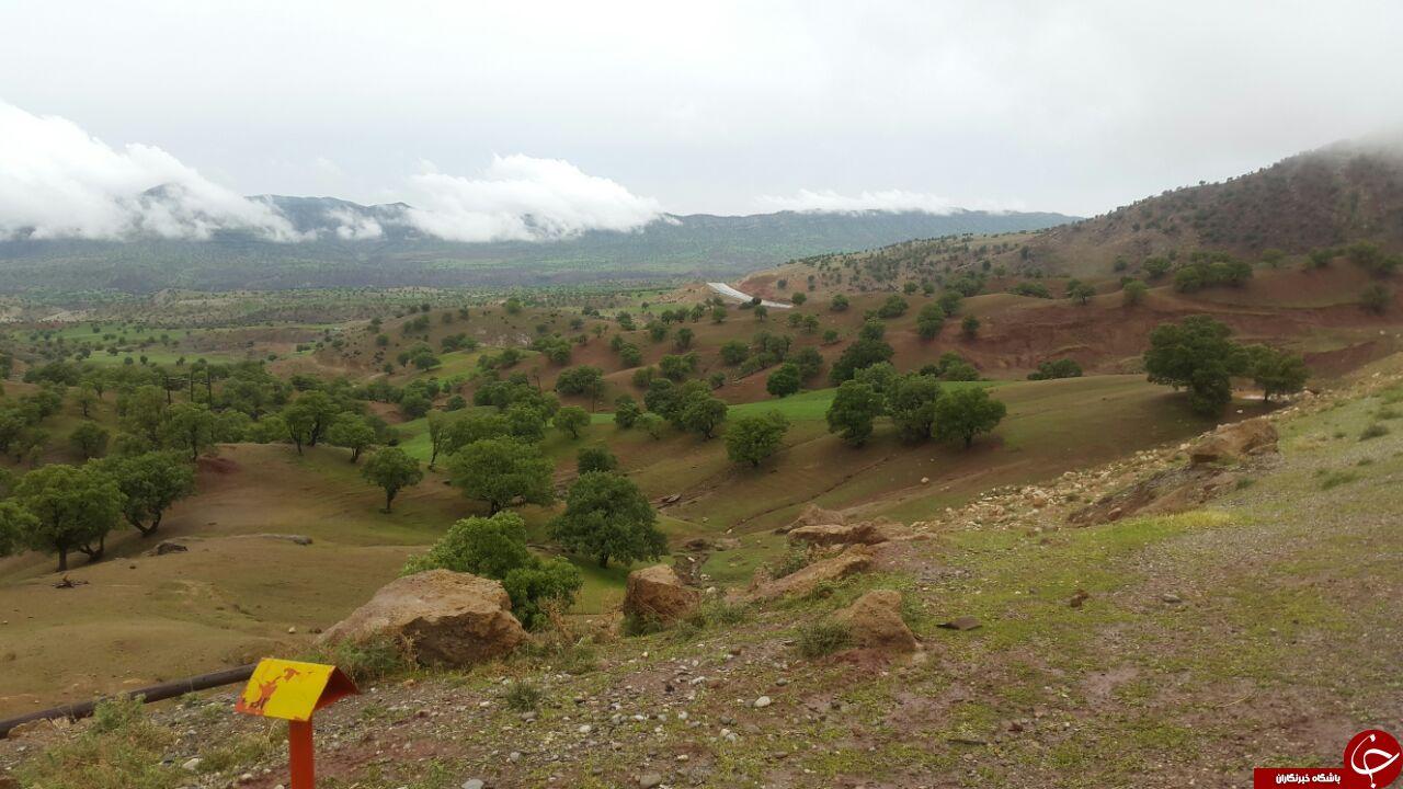 طبیعت چشمنواز کوهدشت در قاب دوربین + تصاویر