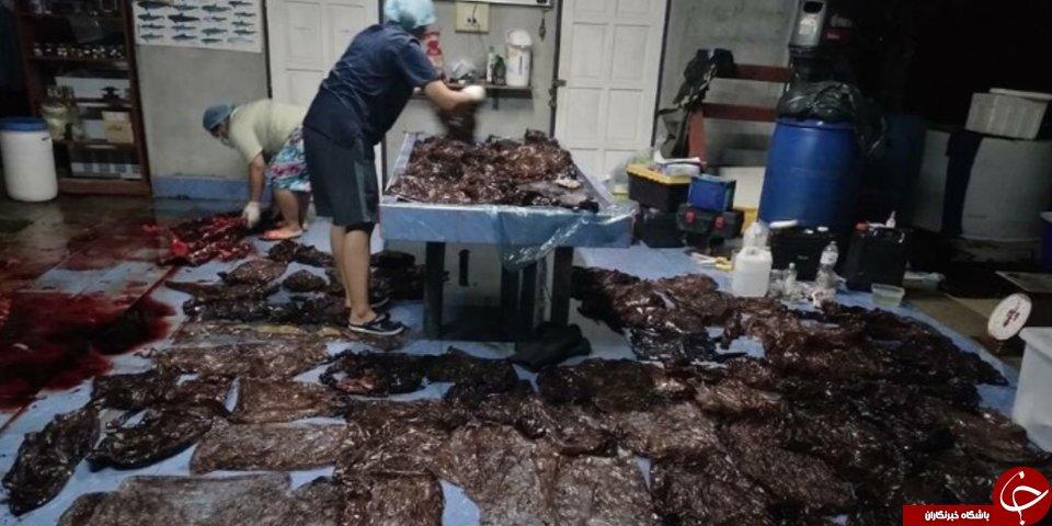 کشف ۸۰ کیسه پلاستیکی در شکم نهنگ مُرده در تایلند+ تصاویر