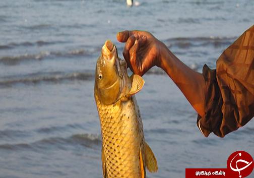 رد پای بی توجهی انسان در کنار لاشه ماهیان خزر / برای نجات ماهیان دریا خزر چه باید کرد؟