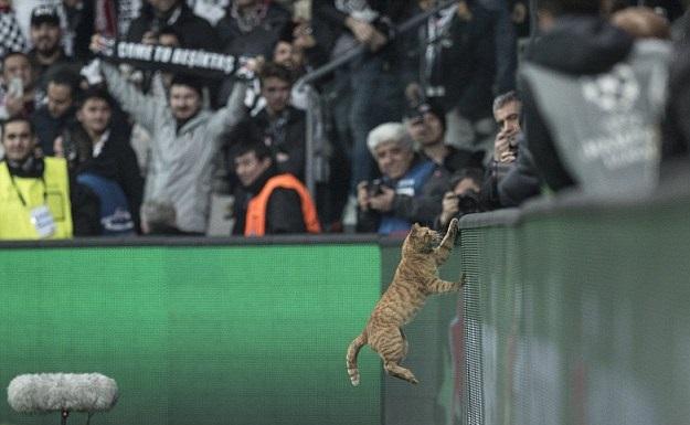 جریمه سنگین باشگاه ترک به علت ورود گربه به زمین