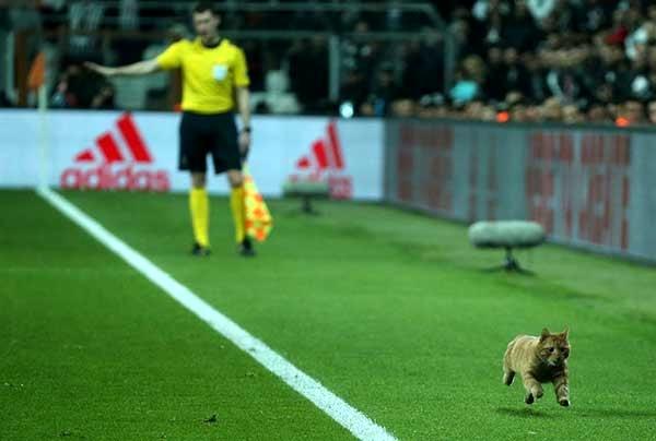 جریمه بشیکتاش به خاطر ورود گربه به استادیوم
