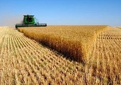 پیش بینی خرید بیش از 700هزار تن گندم از مزارع استان رمانشاه