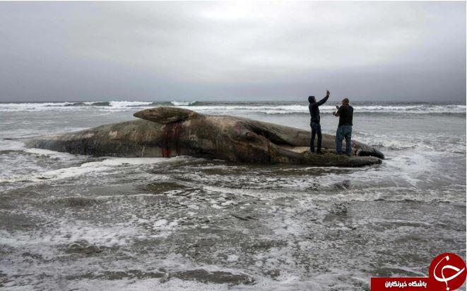 تصاویر روز: از گرمای جانفرسای پاکستان تا سلفی با لاشه نهنگی که در مکزیک به گل نشست