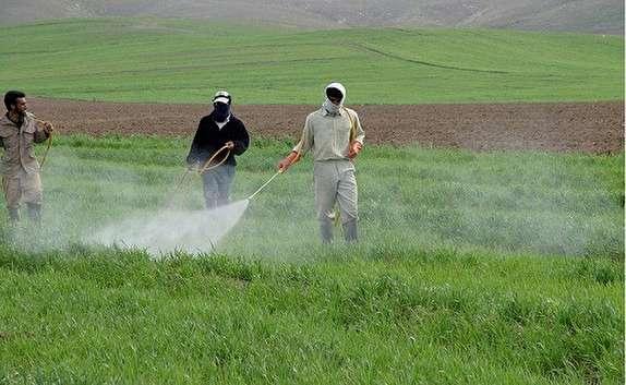 باشگاه خبرنگاران -ساماندهی استفاده ازسموم در محصولات کشاورزی قم