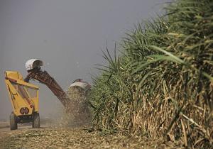 ایران در تولید شکر به خودکفایی رسید/تولید 8 میلیون و 100 هزار تن چغندر قند در سال گذشته