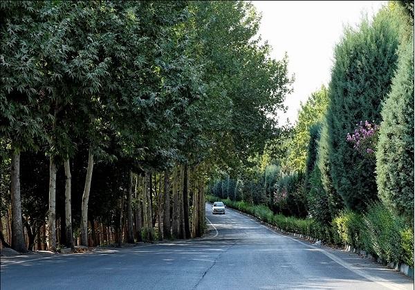 محیط زیست از سم پاشی پارک جنگلی چیتگر اطلاعی ندارد