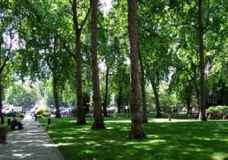 باشگاه خبرنگاران -افزایش ۹۰ هکتاری فضای سبز منطقه ۲۲ تهران
