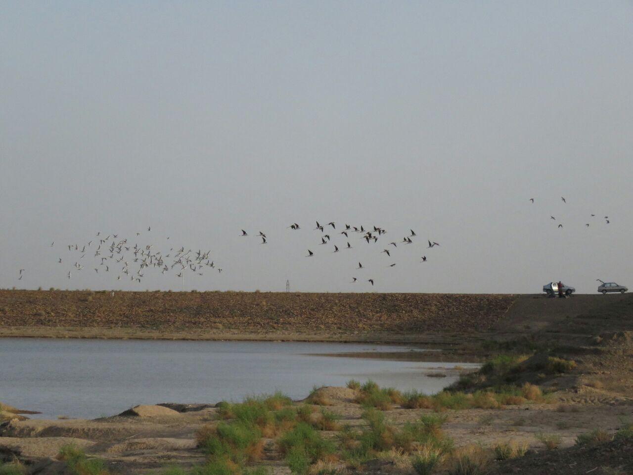 امسال میزبان بیش از شانزده گونه مختلف پرندگان مهاجر بود