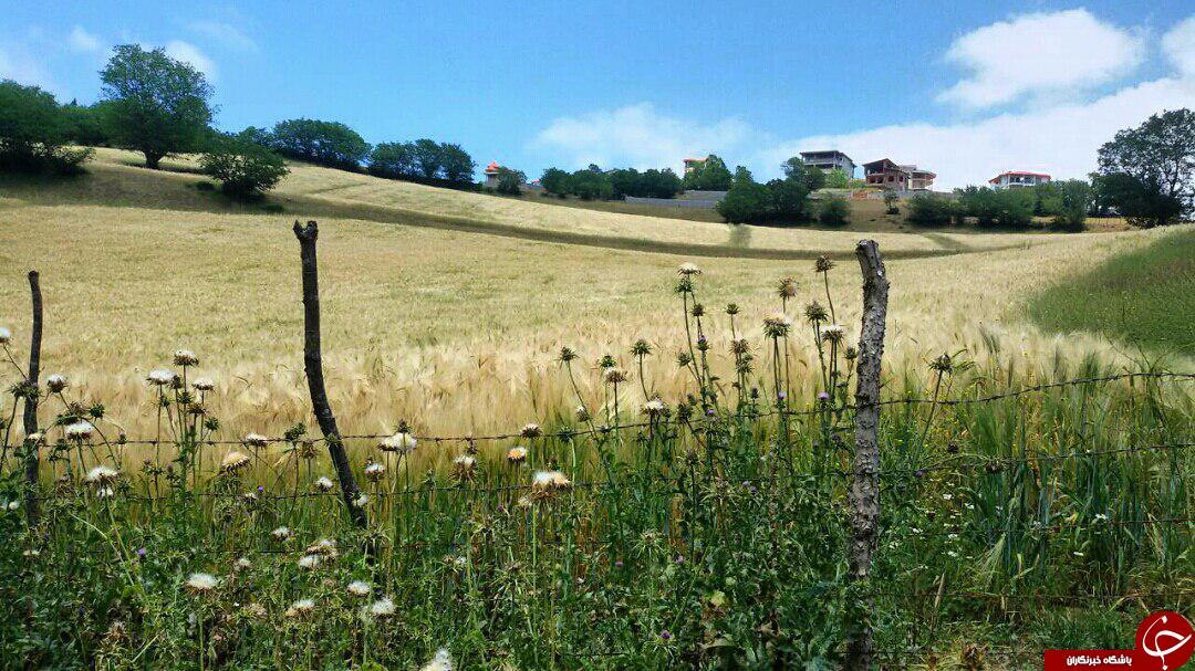 طبیعت بهاری و زیبا در سیرگاه + عکس