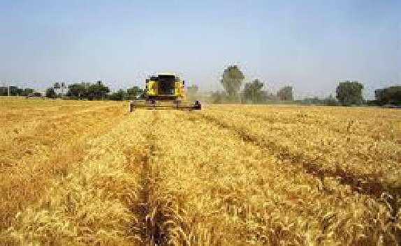 باشگاه خبرنگاران -پیش بینی برداشت 87 هزار گندم از مزارع شهرستان مهاباد