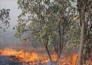 مهار آتش در جنگلهای گردنه شهید باقری