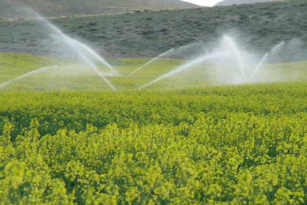 افزایش 25 درصدی تولید گندم در همدان