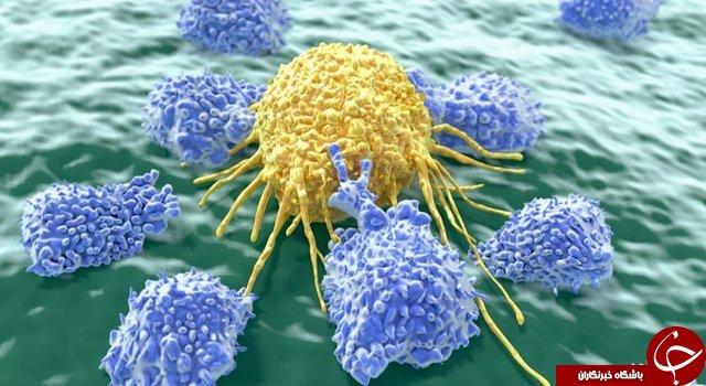 «سلولهای کشنده» سلولهای سرطانی چگونه سوخت گیری میکنند؟