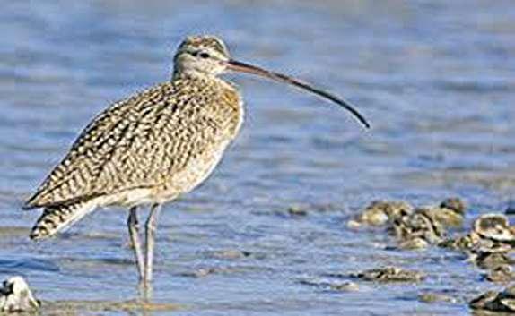 باشگاه خبرنگاران -شناسایی پرندههای آبزی در خراسان شمالی