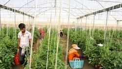 راه اندازی کسب و کار گلخانه ای چقدر هزینه دارد؟